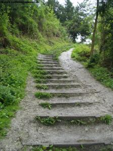 Steps up to Boxhill
